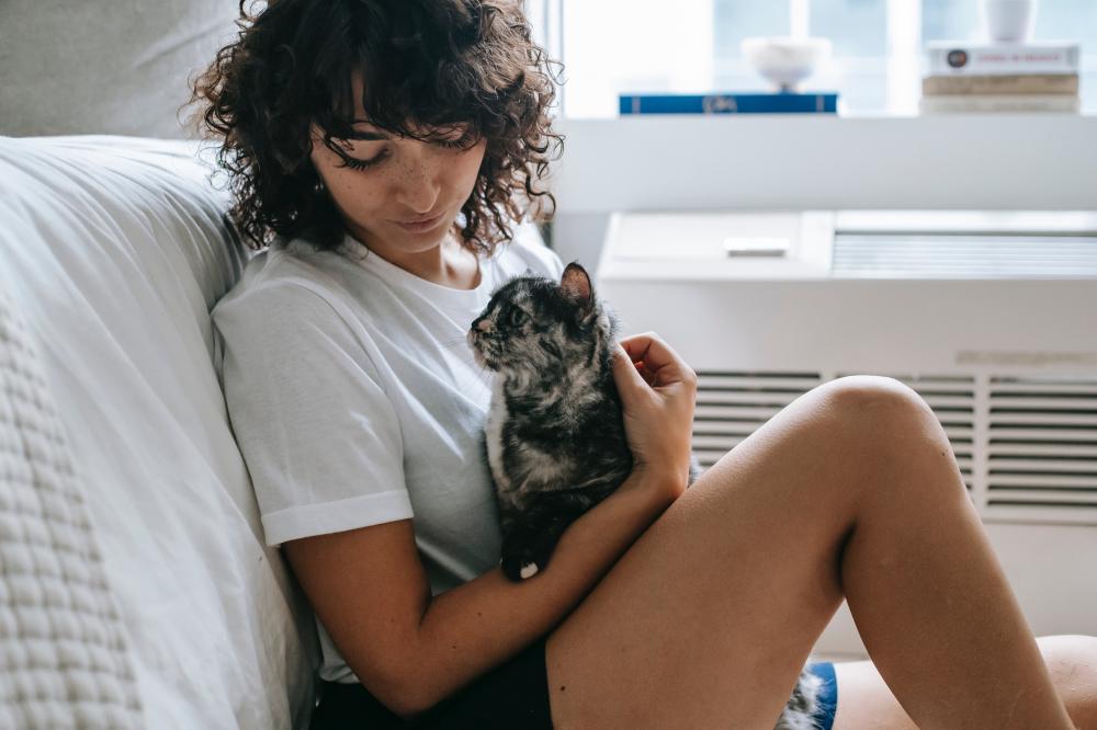 Ar-condicionado prejudica a saúde dos animais de estimação? Confira mitos e verdades sobre o mundo dos pets